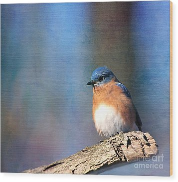 January Bluebird Wood Print
