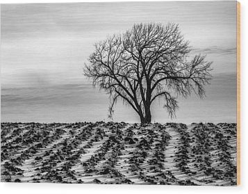 January Wood Print by Penny Meyers