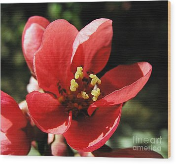 Wood Print featuring the photograph Japanese Apple Flower by Vesna Martinjak