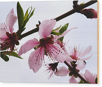 Japanese Cherry Tree Wood Print by Camille Lopez