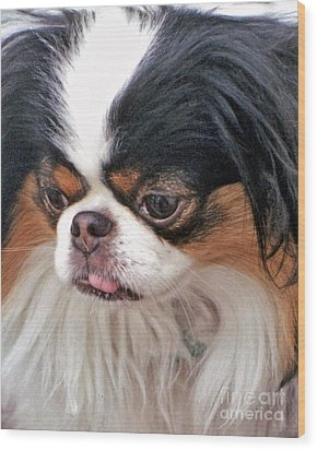 Wood Print featuring the photograph Japanese Chin Dog Portrait by Jim Fitzpatrick