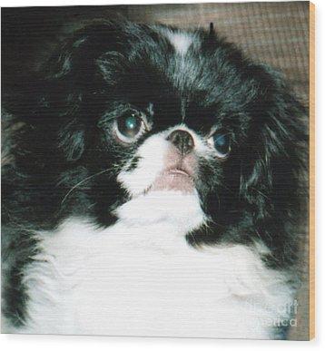 Japanese Chin Puppy Portrait Wood Print by Jim Fitzpatrick