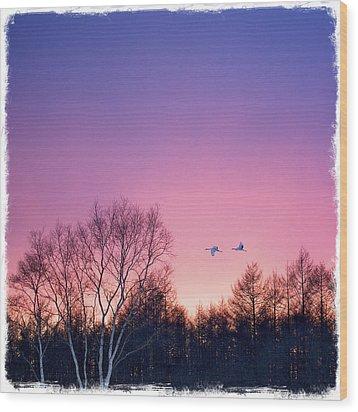 Japanese Cranes Flying To Roost Hokkaido Japan Wood Print