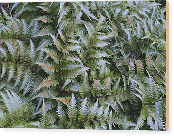 Wood Print featuring the photograph Japanese Ferns by Kathryn Meyer