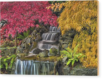 Japanese Laced Leaf Maple Trees In The Fall Wood Print by David Gn
