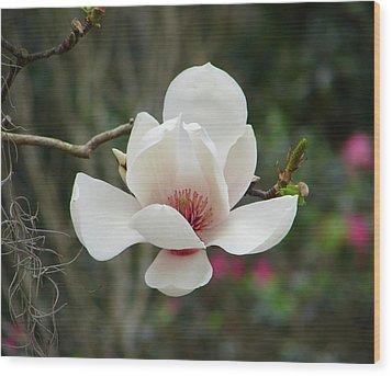 Japanese Magnolia Wood Print by Lew Davis
