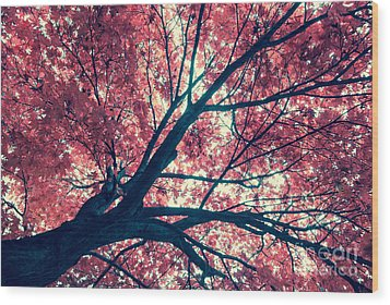 Japanese Maple - Vintage Wood Print by Hannes Cmarits
