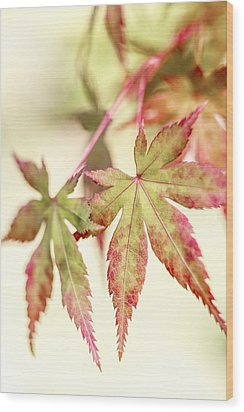 Japanese Maple Wood Print by Caitlyn  Grasso