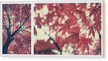 Japanese Maple Collage Wood Print by Hannes Cmarits