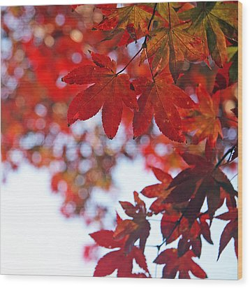 Wood Print featuring the photograph Japanese Maple In Fall by Brooke T Ryan