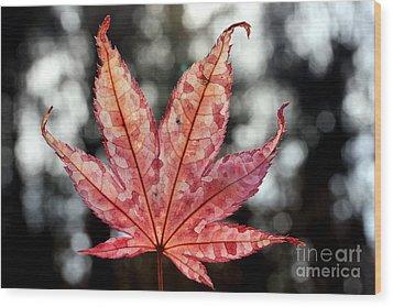 Japanese Maple Leaf - 2 Wood Print