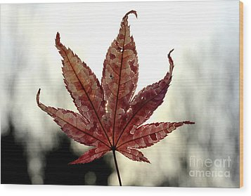 Wood Print featuring the photograph Japanese Maple Leaf - 3 by Kenny Glotfelty