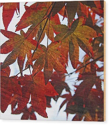 Wood Print featuring the photograph Japanese Maple Leaves With Woodgrain by Brooke T Ryan