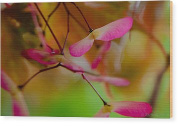 Japanese Maple Seedling Wood Print