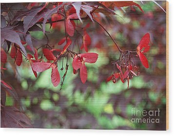 Wood Print featuring the photograph Japanese Maple Tree by Eva Kaufman