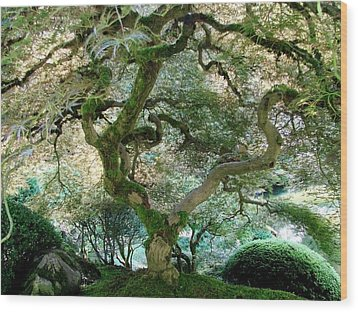 Wood Print featuring the photograph Japanese Maple Tree II by Athena Mckinzie