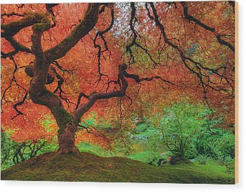Japanese Maple Tree In Autumn Wood Print