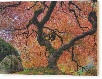 Japanese Maple Tree In Fall Wood Print
