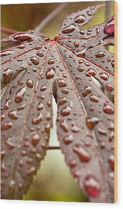 Japanese Maple Tree Leaf Waterdrops Wood Print