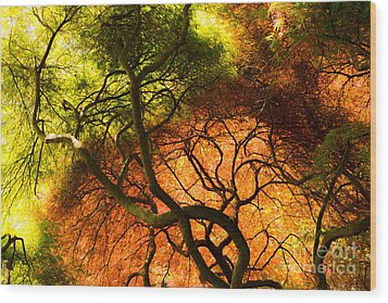 Wood Print featuring the photograph Japanese Maples by Angela DeFrias