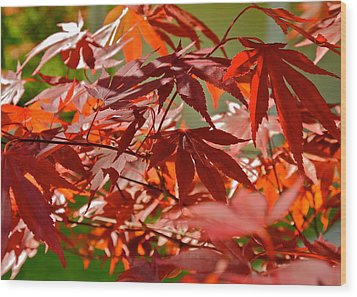 Japanese Red Leaf Maple Wood Print