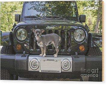 Jeep Dog Wood Print by Edward Fielding