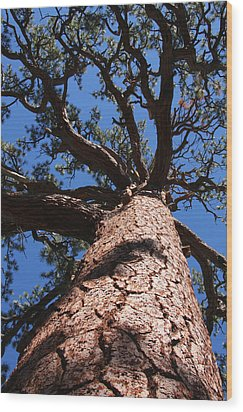 Jeffrey Pine Wood Print