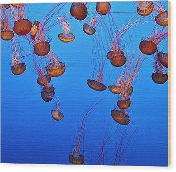 Jelly Dive Wood Print by Ashley Van Artsdalen