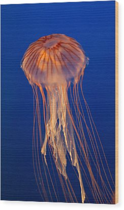 Wood Print featuring the photograph Jelly Fish by Eti Reid