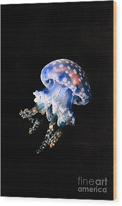 Jelly Fish Wood Print