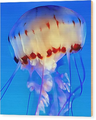 Jellyfish 3 Wood Print by Dawn Eshelman