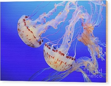 Jellyfish 9 Wood Print by Bob Christopher