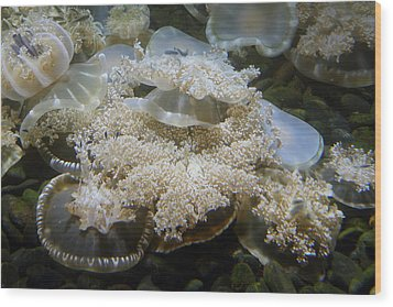 Jellyfish - National Aquarium In Baltimore Md - 121215 Wood Print by DC Photographer