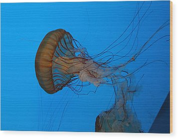 Jellyfish - National Aquarium In Baltimore Md - 121226 Wood Print by DC Photographer