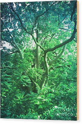 Wood Print featuring the photograph Jersey Tree by Denise Tomasura