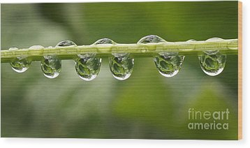 Wood Print featuring the photograph Jewel Drops by Inge Riis McDonald
