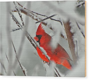 Wood Print featuring the photograph Jewel In The Storm  by John Harding