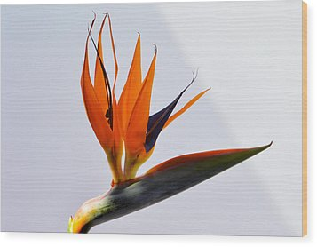 Jewel Of The Tropics. Wood Print by Terence Davis