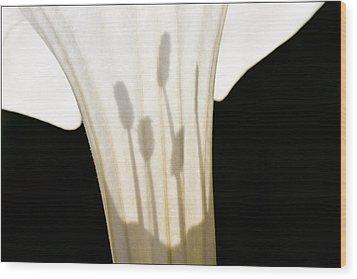 Jimsonweed Chiaroscuro Wood Print