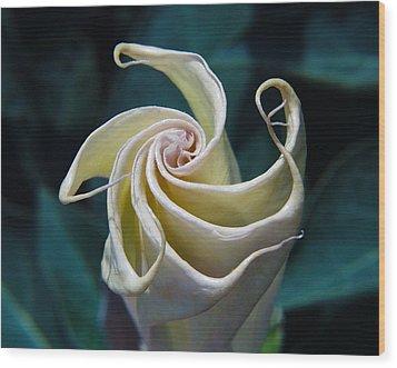Jimsonweed Flower Spiral Wood Print