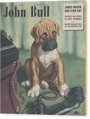 John Bull 1949 1940s Uk Dogs  Magazines Wood Print by The Advertising Archives