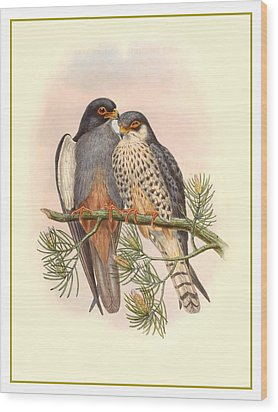 John Gould Birds Wood Print by Gary Grayson