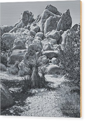 Joshua Tree - 09 Wood Print by Gregory Dyer