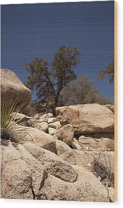 Joshua Tree Wood Print by Amanda Barcon