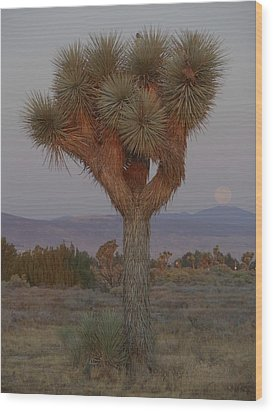 Joshua Tree And Harvest Moon Setting Wood Print by Don Kreuter
