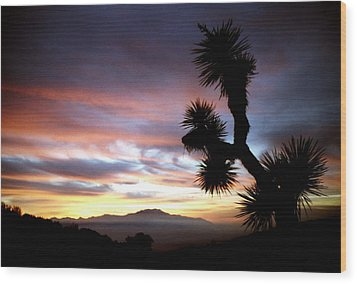 Joshua Tree At Sunset Wood Print by Jetson Nguyen