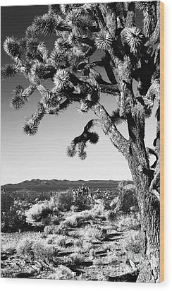 Joshua Tree Bw Wood Print by John Rizzuto