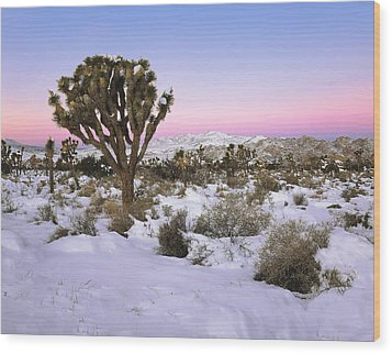 Joshua Tree In Snow Wood Print