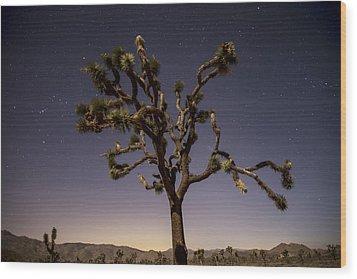 Joshua Tree Night Wood Print by Lee Kirchhevel