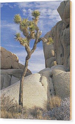 Joshua Tree Np  Wood Print